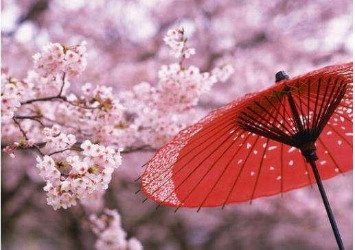 侨外出国:三月赏樱正当